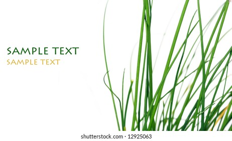 lovely abstract image of green grass against white background
