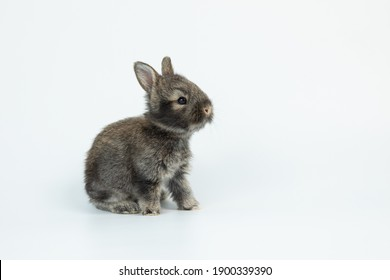 Lovely baby bunny easter brown rabbit on white background. Cute fluffy rabbit on white background Lovely mammal with beautiful bright eyes in nature life.Animal concept.
