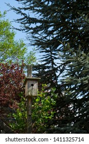 Lovely birdhouse in the colorful nature trees with a perfect blue sky. Wooden birdhouse with green and red trees around it.