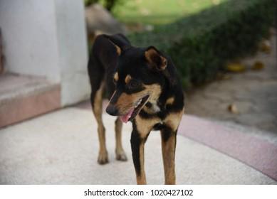 Lovely black dog