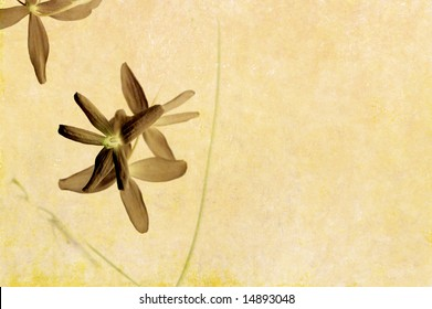 lovely brown background image with interesting earthy texture, floral elements and plenty of space for text
