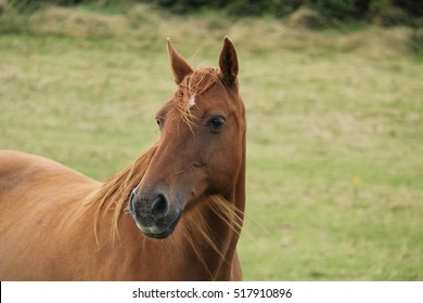 A Lovely Brown Horse with its Ears Standing High.