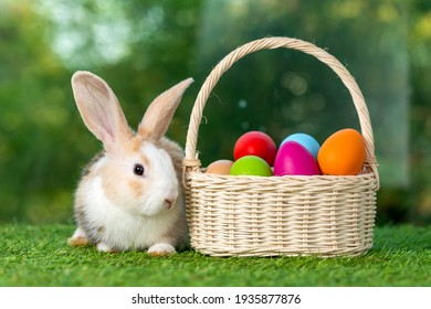 Lovely bunny easter fluffy baby rabbit with a basket full of colorful easter eggs on nature background.