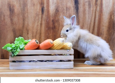 Lovely bunny easter rabbit with a basket of fruits  on wooden background. beautiful lovely pet and basket of corns,carrots,vegetable.