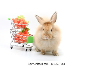 Lovely bunny easter rabbit with a cart of vetgetable  on white background. beautiful lovely pet and cart of baby carrots.