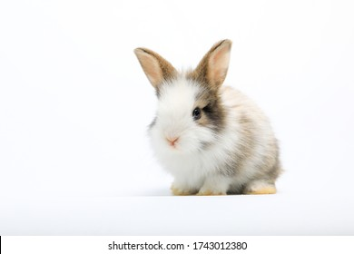 Lovely bunny easter rabbit on white background. beautiful lovely pets.
