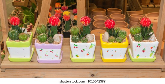 The lovely cactus mini garden on the pot and the pot has fruit pattern paint and show on the wooden shelf