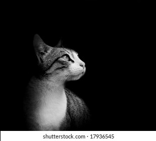 Lovely cat in black background