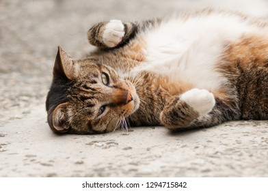 Lovely cat lies on ground