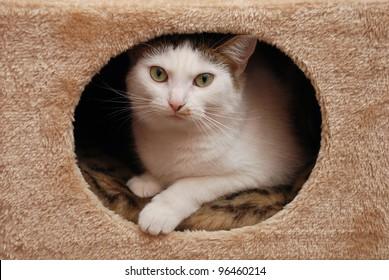 Lovely cat lying in the cat house