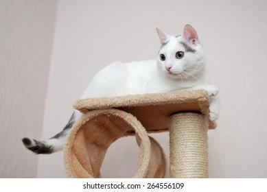 Lovely cat lying on the cat house