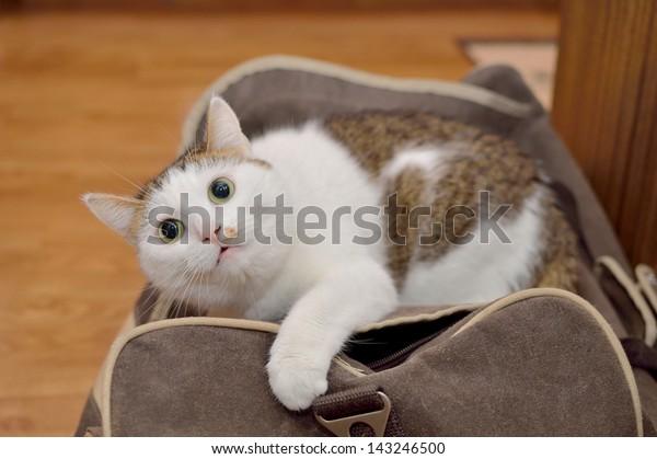 Lovely cat lying on the traveling bag