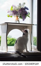 Lovely cat sitting on the window sill and looking at the bouquet of lilac