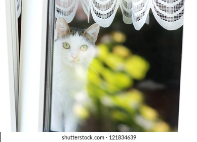 Lovely cat sitting on a window sill behind a window