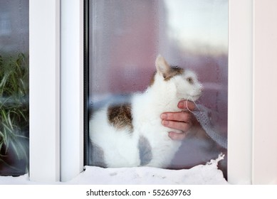 Lovely cat sitting on a  window sill behind a snowy window and a hand of a woman touching the cat