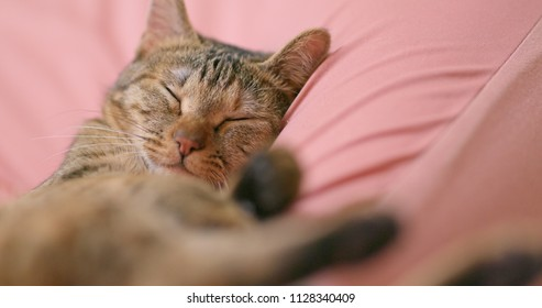 Lovely cat sleep on couch at home