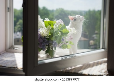 Lovely cat standing on the window sill near the bouquet of lilac