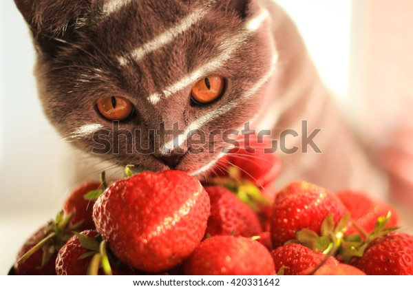 Lovely cat and strawberries