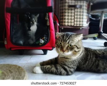 lovely cats looking funny pet