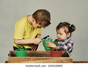 Lovely children transplanted plants. Brother and sister engaged in gardening