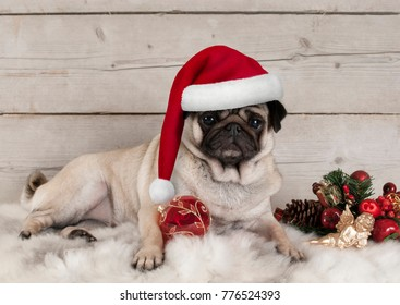 lovely Christmas pug dog puppy lying down on sheepskin blanket with festive ornaments and weathered wooden background