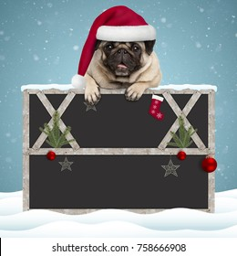 lovely Christmas pug puppy dog hanging with paws on blank blackboard sign with wooden frame and decoration, on snowy background
