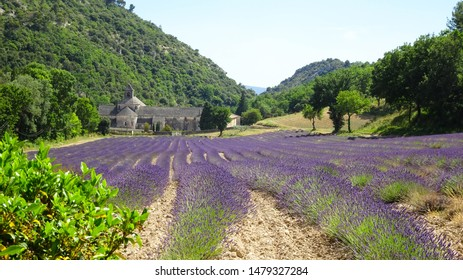 lovely cistercian church Notre-Dame de Sénanque (Senanque Abbey) with blooming lavender fields during lavender season, touristic attraction in Luberon Valley, Provence, southern France, Europe