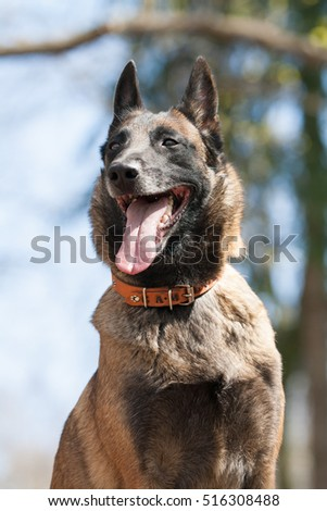 Lovely Cute Dog Funny Face Interesting Stock Photo Edit Now
