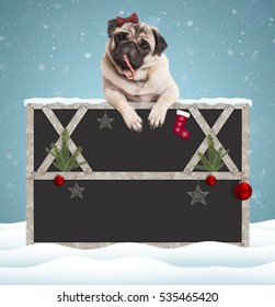 lovely cute pug puppy dog eating candy cane and hanging with paws on blank blackboard sign with wooden frame and Christmas decoration, on snowy background