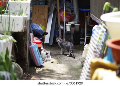 lovely cute stripe pattern street cat