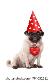 lovely cute Valentine's day puppy pug dog sitting down with red I love you heart and party hat with hearts, isolated on white