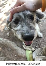 the lovely dog