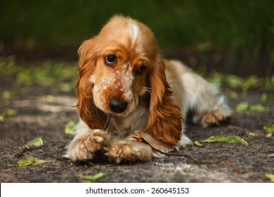 Lovely dog chumping a branch
