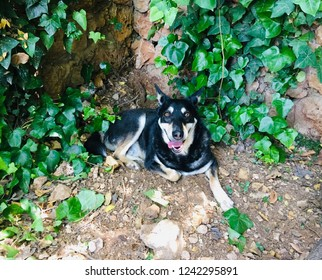 A lovely dog resting in the garden