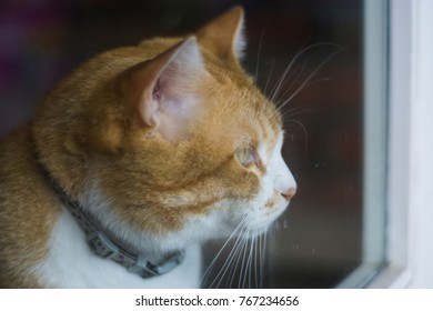 Lovely domestic cats