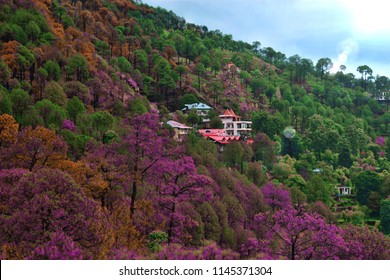 Lovely dramatic landscape View of  houses in Kasauli, Northern India during the day.