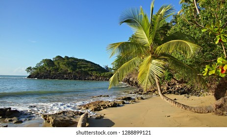 Lovely empty beach with small palm, Playa Bonita Beach, Dominican Republic, Samana peninsula