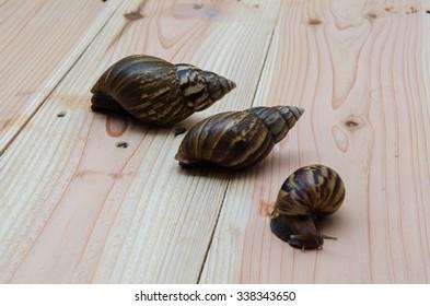 Lovely family Snail