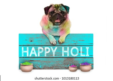 lovely Festival of colors pug puppy dog, covered with colored powder, hanging on sign with text happy Holi, isolated on white background