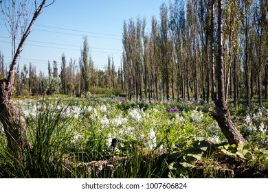 Lovely flower patches blooming in a field in Mexico City, Chinampas of Xochimilco
