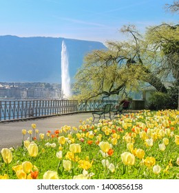 Lovely flowers in front of Jet d'Eau. Geneva, Switzerland. Lake Geneva.