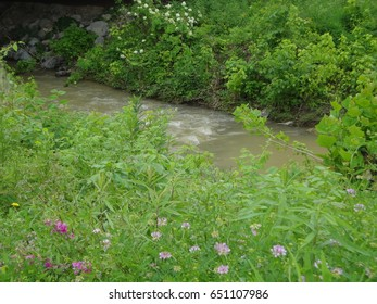 A lovely flowing creek surrounded by greenery and gorgeous flowers. East Tennessee, USA.