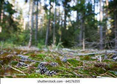 lovely forest scenery - pine tree cones lying in the moss (shallow DOF; sharp focus on the cone; very high native resolution)