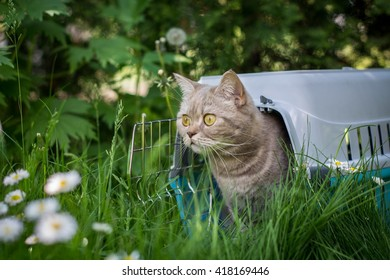 Lovely gray cat sitting inside pet carrier on the grass in spring park sniffing fresh air