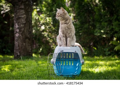 Lovely gray cat sitting on pet carrier on the grass in spring park sniffing fresh air