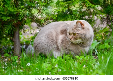 Lovely gray cat sitting on the grass in spring park