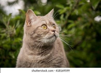 Lovely gray cat in spring park