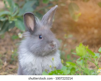 the lovely gray rabbit in the backyard