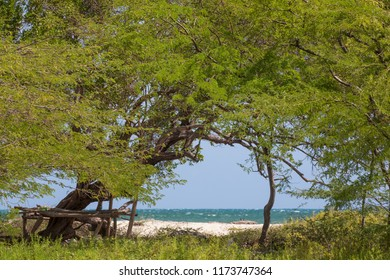 Lovely green trees at the beach at Jackson Bay in Jamaica