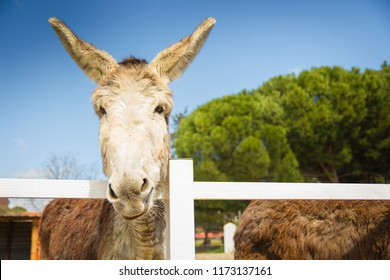 Lovely grey and white donkey at the fence